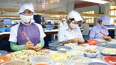 hạt điều xuất khẩu